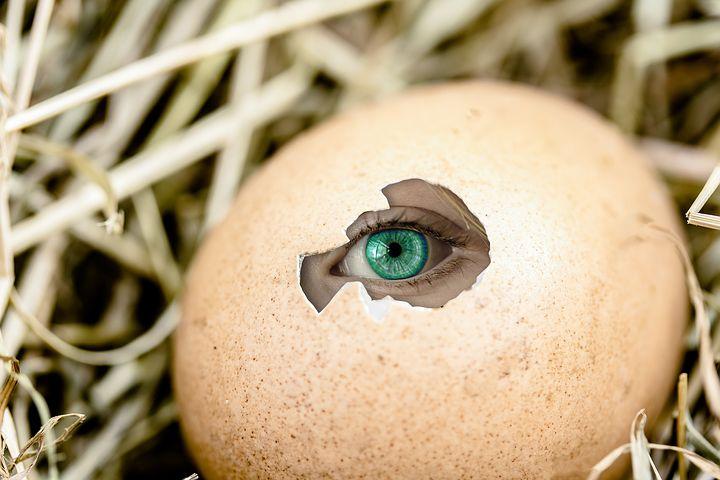 egg-2502948__480