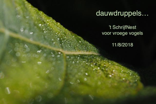 dauwdruppels groen blad